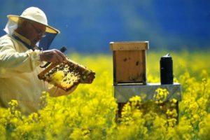 Historia de la apicultura en México