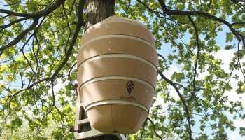 Colmenas de abejas más grandes del mundo
