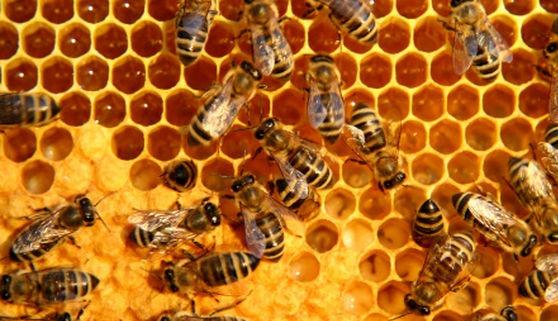 Fotografía de colmenas de abejas