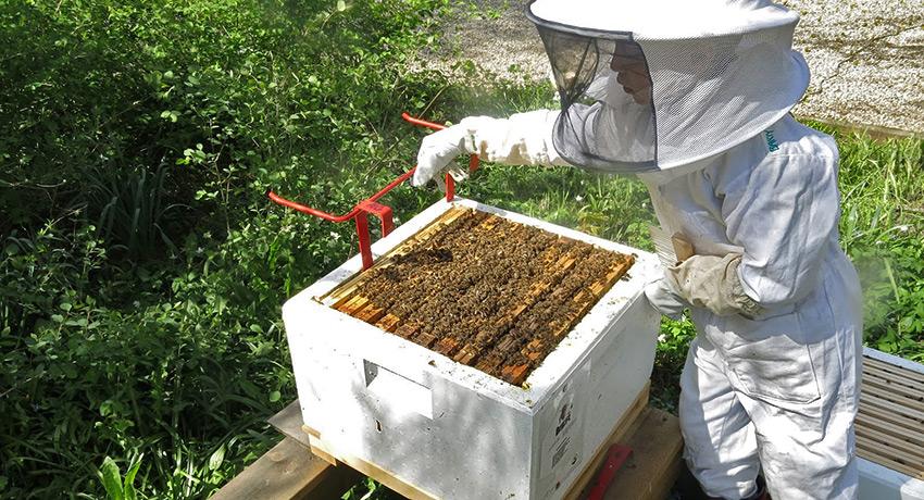 Traslado de colmenas de abejas melíferas