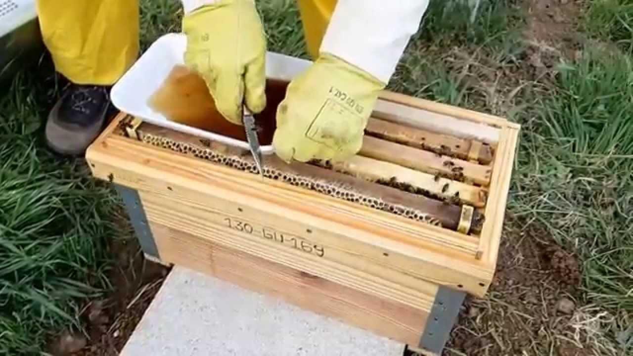 Construcción de una colmena de abejas