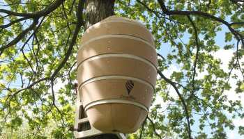 Colmenas-de-abejas-más-grandes-del-mundo