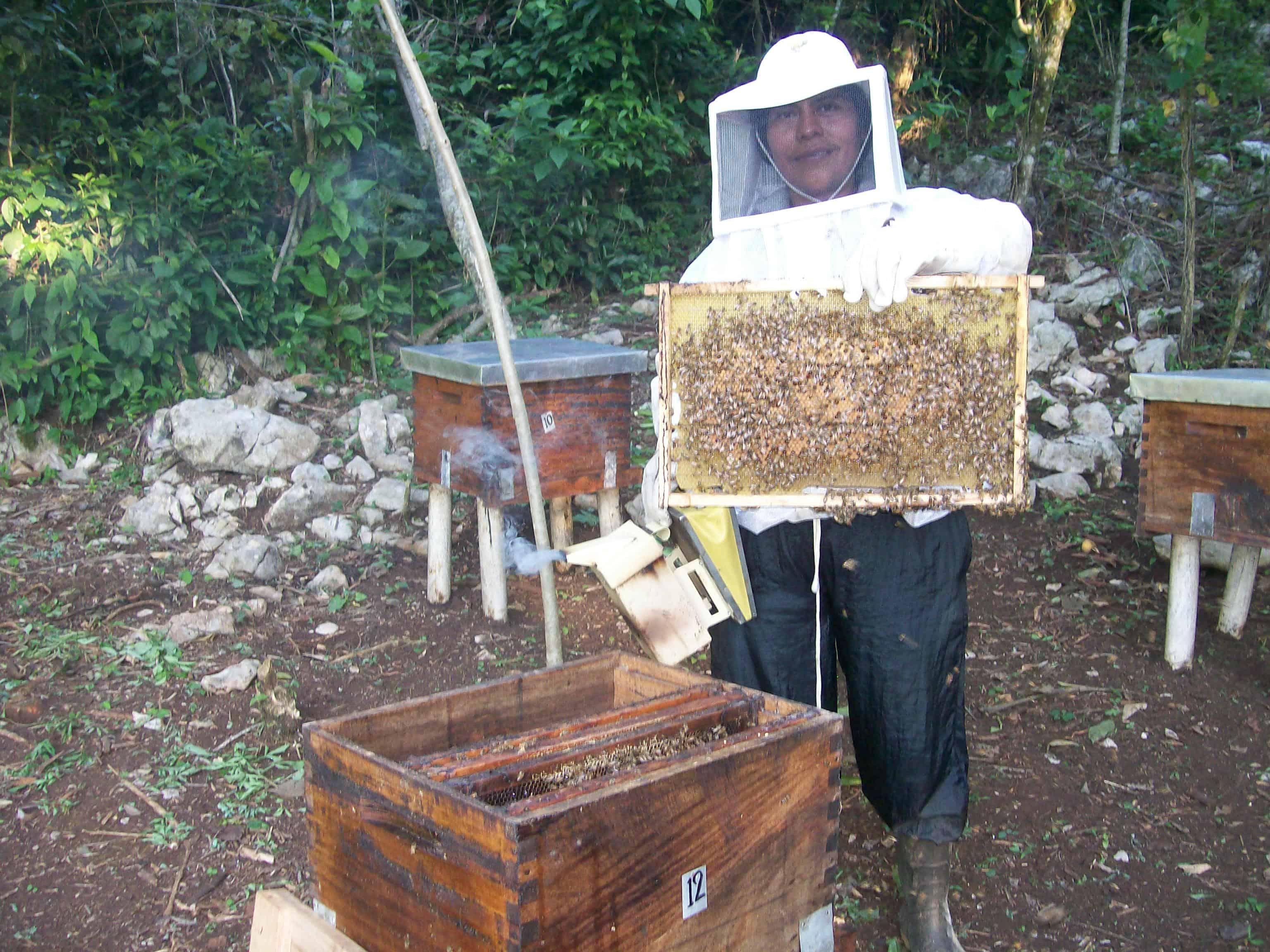 Caracteristicas de la apicultura