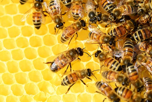 Producción y extracción de la miel