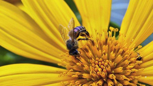 Condiciones para la producción de miel ecológica